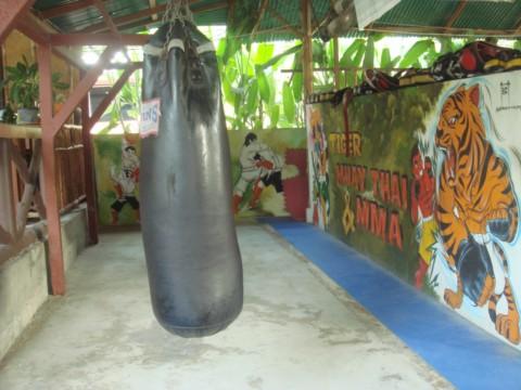 TIGER MUAY-THAI & MMA