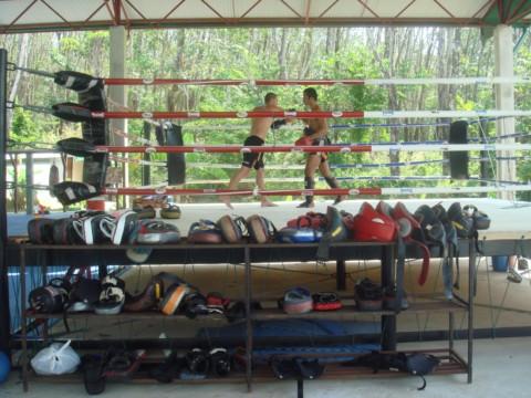 тренировка в Тайгер Клаб