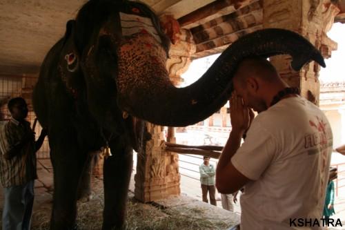 благословение слонихи Лакшми