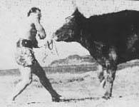 """Читайте нашу статью """"Все известные бои Мас Оямы с быками.'"""